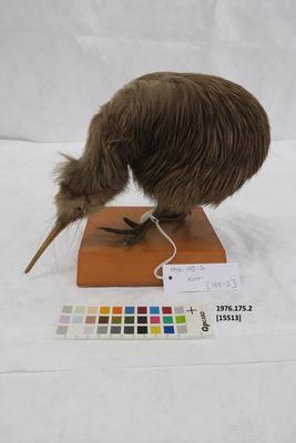 Animal specimen
