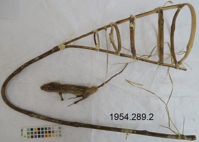 Animal specimen, Rodent trap