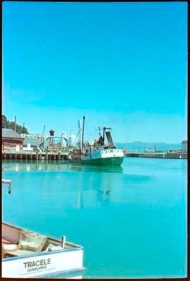 Tracele in Gisborne Harbour