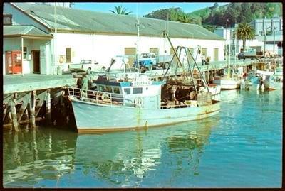 Boat in Gisborne Harbour