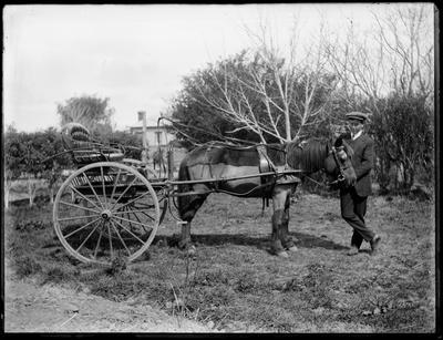 Boy with small horse and buggy.