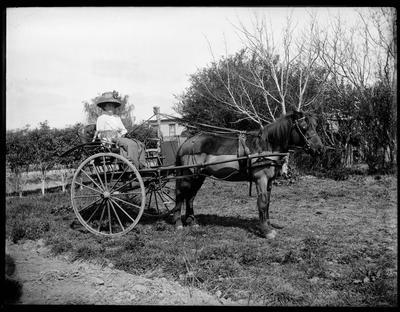 Woman with cat in buggy.