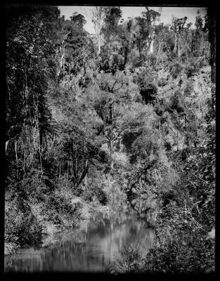 River and bush scene.