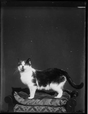 Cat in front of dark backdrop.