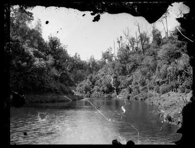 River/lake and bush scene.
