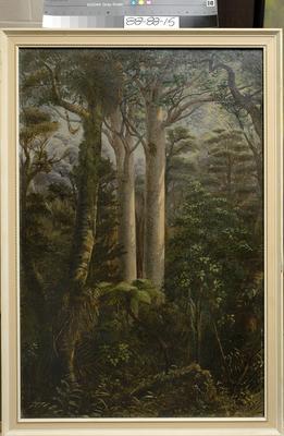 (Untitled) Kauri trees