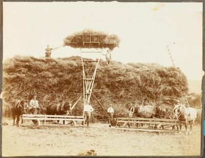 Haymaking at Wairakaia Station